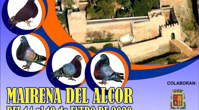 Ya se puede visitar la Exposición local de Palomas de Raza